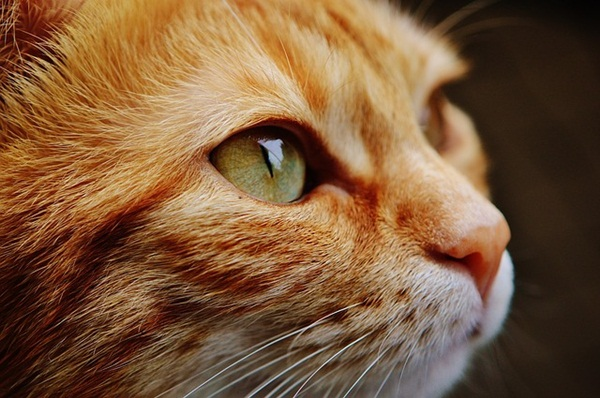 cat-1455468_640.jpg